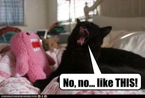 Gir and Domo | Mary's Be a GoodDog Blog: lol cats can give you…