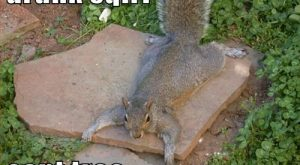 Drunk Squirrel  with Captions | Can Has Cheezburger? – cant – Lolcats n…