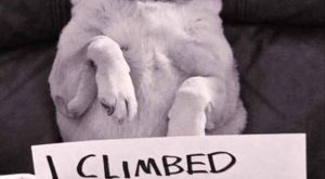 Of The Most Hilarious Pet Confessions – BlazePress