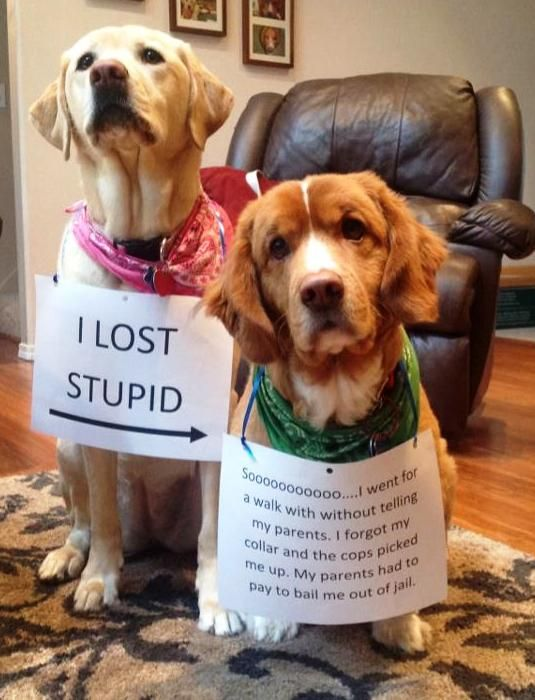 """""""I LOST STUPID – Soooo…I went for a walk without telling my parents. I…"""