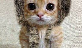 30 Cats And Other Cute Animals Winking | Best Pic: Animals, Cute Cats, Funny…