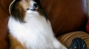 "Dog Bios That Will Hilariously Remind You Of Somebody You Know #funny "">…"