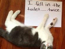 Hahahahaha, my cats fallen in the toilet before