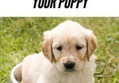 Crate training your puppy or adult dog can be one of the best things…