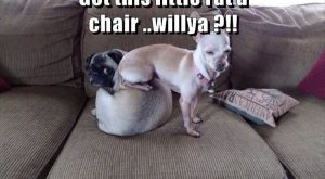 "Funny Animal  –  Images #funnydogshaming ""> #funnydogshaming"