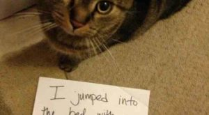 The best of cat shaming – Part  – FB TroublemakersFB Troublemakers