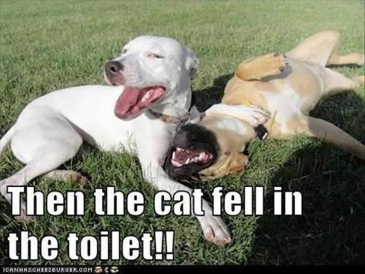 """Funny Animal Pictures Of The Day – 15 Images #funnydoghumor explore Pinterest""""..."""