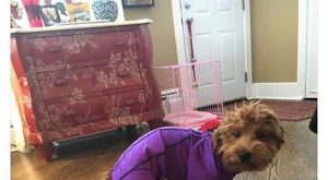 """Funny Dog Memes That Will Make You Laugh –   """">"""