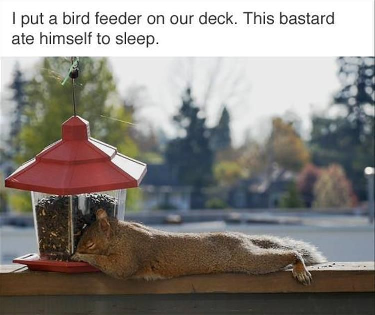 I put a bird feeder on our deck. This bastard ate himself to sleep