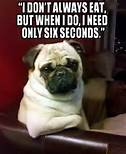Funny pug pictures With Captions – Bing Images