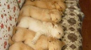 "Aww! Look at all the little puppies! – #puppies search Pinterest""> #puppies #d..."