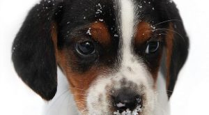 "First winter – so cute! #puppies search Pinterest"" #puppies #dogs search Pinterest"" #dogs #cute…"