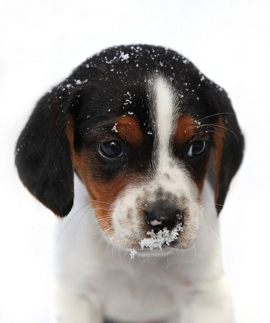 """First winter – so cute! #puppies search Pinterest"""" #puppies #dogs search Pinterest"""" #dogs #cute…"""