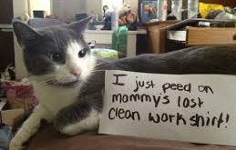 cat captions – Google Search