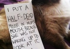 Cat-Shaming At Its Best & #; | best stuff