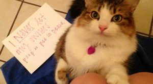 Funny pictures of public cat shaming featuring photos of felines and accompanying captions that…