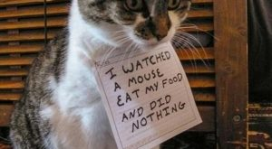 Funny Cats | dumpaday funny pictures