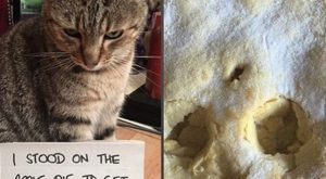 Cat Shaming Pictures All Cat Owners Will Understand