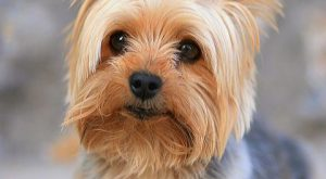 Keep your vacuum in the closet and adopt one of these low-maintenance pups. #bestdogbreeds…