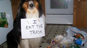 "Lesson # ""> #- Shaming your dog #funnydogshaming ""> #funnydogshaming"