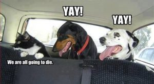 funny dog pics with captions | funny dog photo with caption yay car ride…