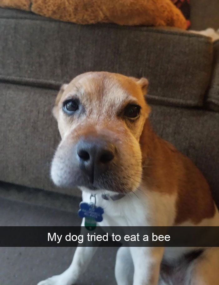 + Hilarious Dog Snapchats That Are Impawsible Not To Laugh At (Part ) …