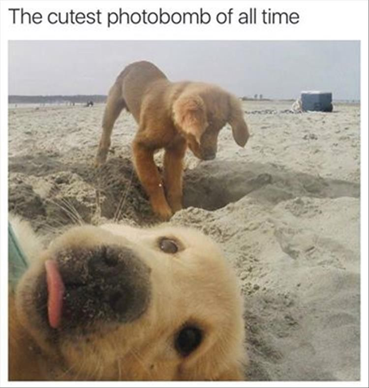 "Funny Animal Pictures Of The Day – 23 Pics #funnydoghumor explore Pinterest""> #..."