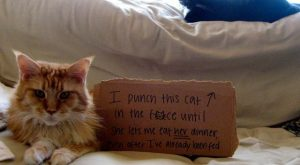 "Cats and their crimes – #funnydogshaming ""> #funnydogshaming"