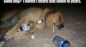 "Funny Animal Pictures Of The Day – 22 Pics #funnydoglaughter explore Pinterest""&gt..."