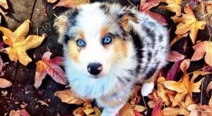 "18 Cute Dog Puppies With Blue Eyes! #dogs explore Pinterest""> #dogs #puppies explore..."