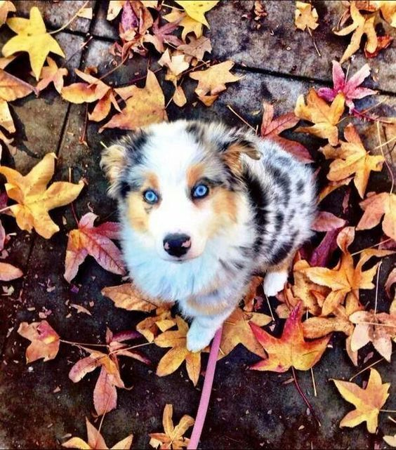 """18 Cute Dog Puppies With Blue Eyes! #dogs explore Pinterest""""> #dogs #puppies explore..."""