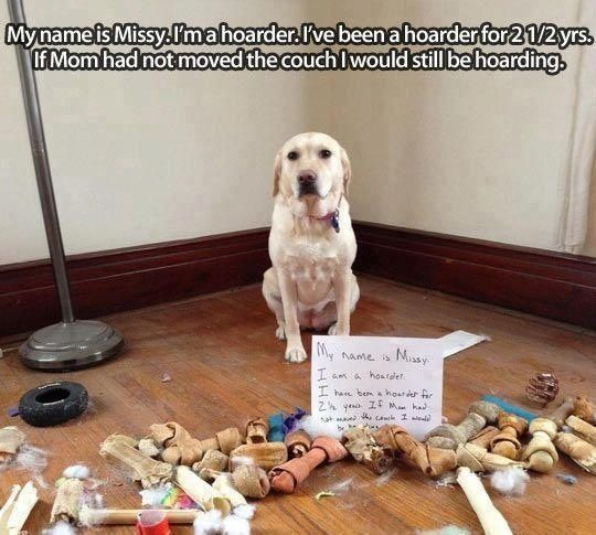 """I'm not a hoarder, this is """"collection""""!"""