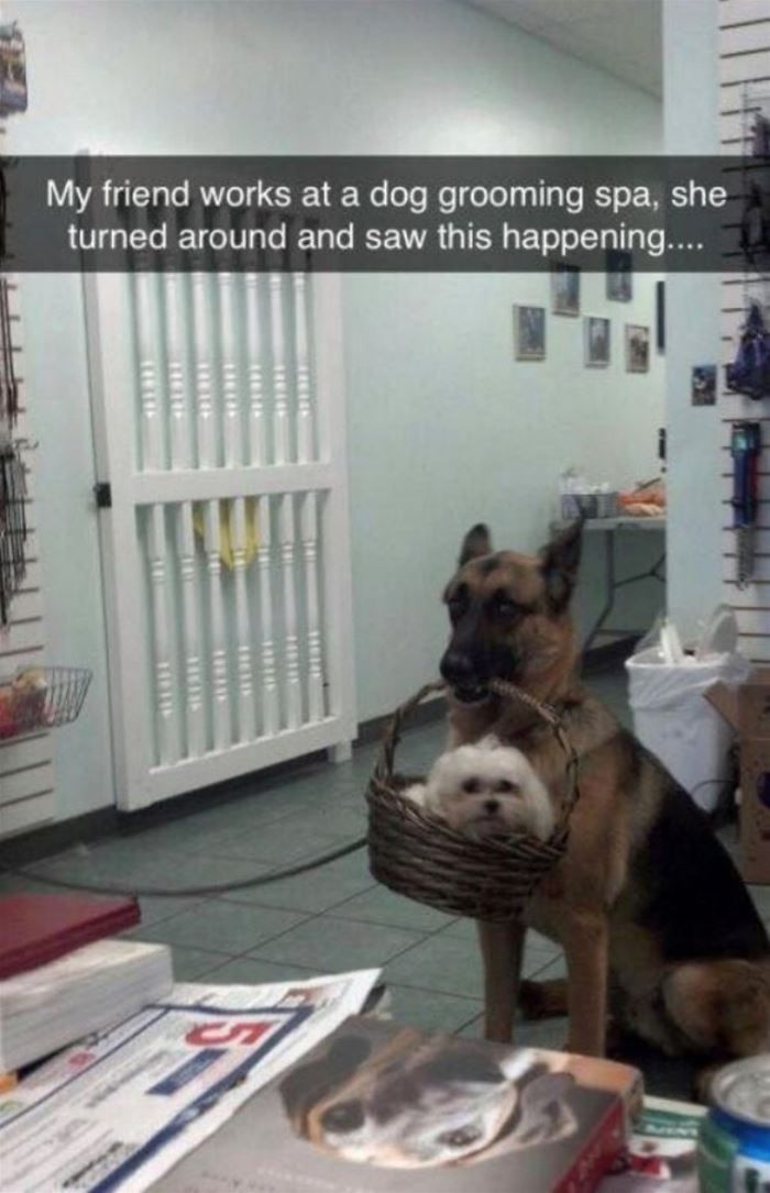 """150 Funny Animal Snapchats Pictures #funnydogpictures explore Pinterest""""> #funnyd..."""