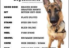 "German Dog Commands to Train your Dog #bestdogbreeds ""> #bestdogbreeds"