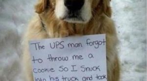 "Funny Animal Picture    #funnydogshaming ""> #funnydogshaming"
