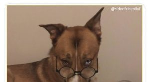 """40 Funny Dog Pictures With Captions #funnydogwithcaptions explore Pinterest""""> #fu..."""
