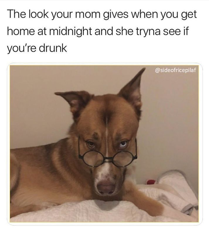 """Funny Dog Pictures With Captions #memes #humor """"> #memes #humor"""
