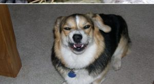 "Dogs Caught Mid Sneeze #funnyhumor ""> #funnyhumor"