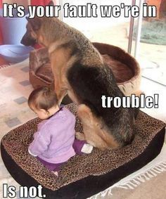 Funny German Shepherd Meme For Dog Lovers Click Here To Check Out