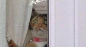 Animal Fun ww