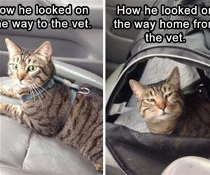 On The Way To The Vet