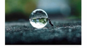 Memes, Water, and : Ant pushing a water droplet.