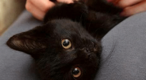Cats, Memes, and Black: Black cats don't steal your soul  they steal your heart