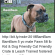 Memes, Yo, and Boxer: BR  Northwest Boxer Rescue  BamBam http://bit.ly/nwbr-BamBam BamBam  yo male Fawn  lb Kid & Dog Friendly Cat Friendly  Crate & Leash Trained fostered in Albany, OR