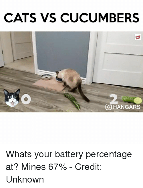 Cats, Memes, and : CATS VS CUCUMBERS   HANGARS Whats your battery percentage at? Mines % – Credit: Unknown