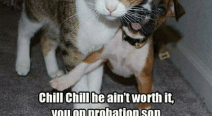Chill, Memes, and : Chill chill he ain't worth it  you on probation son ~Nutzy~