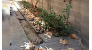 Cats, Catnip, and What: EvilChrisPriestly  Follow  TheEvilChris  Lets plant catnip, he said. It prevents  mosquitoes, he said. What could go wrong, he  said. #cats  RETWEETS LIKES  , ,  E