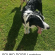 Dogs, Facebook, and Memes: FOUND DOGS Lewiston #Adelaide //    https://www.facebook.com/dianna.carbone