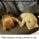 Cats, Memes, and Smile: Found my cats holding paws while napping Pals always bring a smile to my face :-)