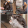 Funny Animal  –